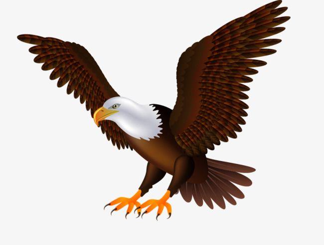 Da Aguia A Voar Eagle Asa De Aguia Aves Imagem Png E Psd Para Download Gratuito Eagle Vector Eagles Wings Png