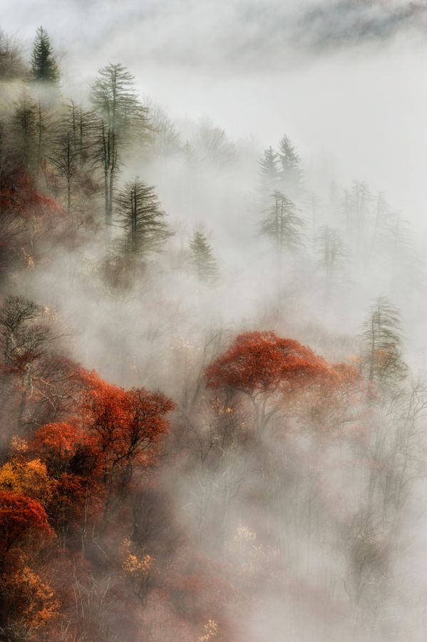 Mystical Morning by Donna Eaton, via 500px