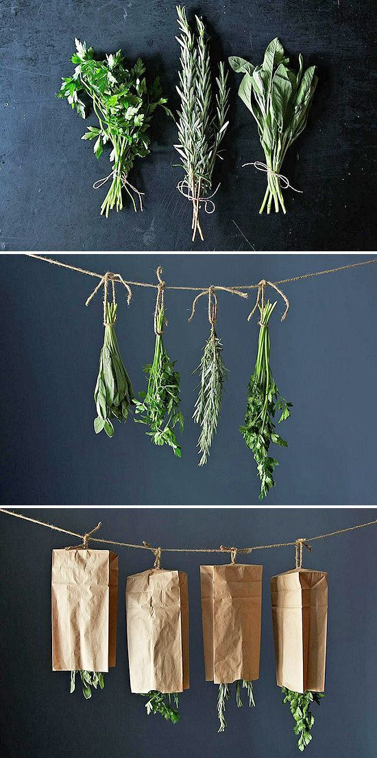 drying-herbs-56 How to Preserve Herbs – Drying Herbs Drying herbs is pretty self explanatory, but the most space intensive way to preserve herbs. If you choose this route, you must have a warm, dry indoor area to hang the herbs. Hang them in small bunches, cover them to keep them clean, and when dry, strip the leaves off the branches and seal in bags or jars. Make sure they are crispy dry before you seal them up. You can also dry herbs in the microwave or a food dehydrator.