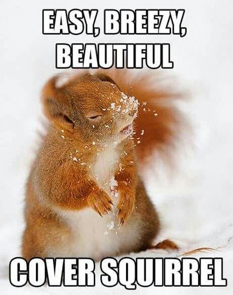 Cover squirrel!