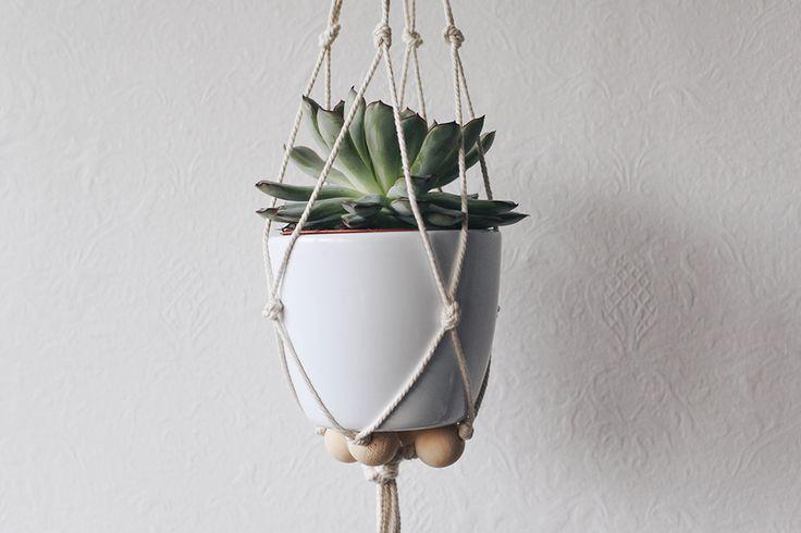 Hello ! En ce moment, avec l'amoureux on achète un peu trop de (petites) planteset on travaille comme on peut pour avoir d'avantage la main verte (spéciale dédicace aux 2 ou 3 perdues en route)…