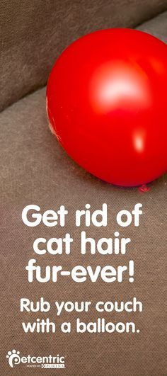 Anyone with a shedding cat needs this pin! This helpful guide gives easy tricks for getting your pet's fur out of anything, including clothes, furniture and carpet. For  example, to clean up your couch, use the static electricity from a blown up balloon to pick up fur.