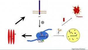Retrômero é a nova bola da vez na doença de Alzheimer e, outras doenças neurodegeneraticas como Parkinson. Retrômero é um complexo protéico que tem a capacidade de separar as proteínas que precisam ser reprocessadas no complexo de Golgi ou lisossoma. Ou seja, seu funcionamento adequado está intimamente ligado ao excesso de proteína beta-amilóide visto em determinados neurônios de pacientes com Alzheimer. Além disso, nesse texto são apontados novos protocolos de tratamento envolvendo uso de…