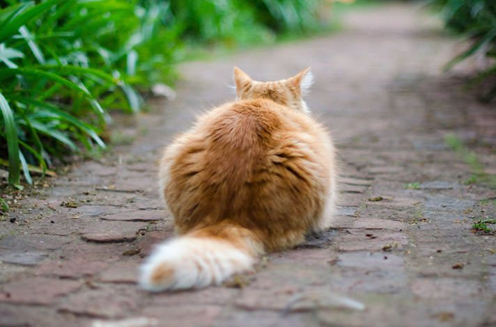 22 best Tails images on Pinterest | For cats, Cat tails and For dogs
