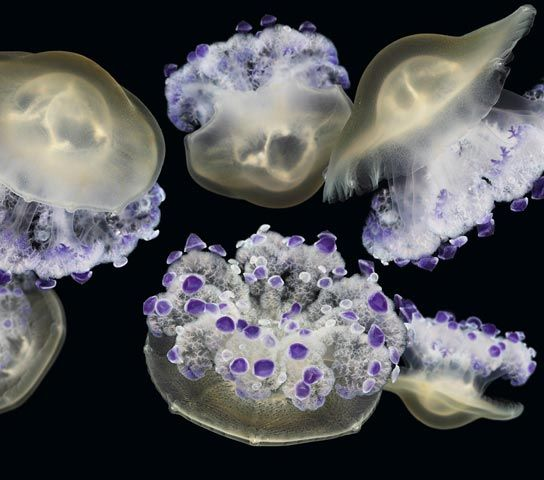 New Jellies exhibit at the Monterey Bay Aquarium