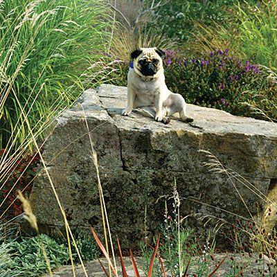 Garden Ideas For Dogs 81 best garden - dog ideas images on pinterest | backyard ideas
