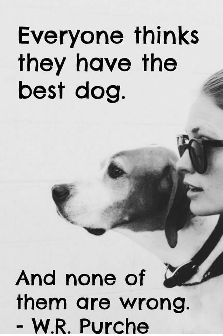 a man is a dogs best Dogs have an extraordinary effect on many aspects of the human condition, offering physical, emotional, and social benefits for this reason, they deserve the well-deserved title of man's best friend.