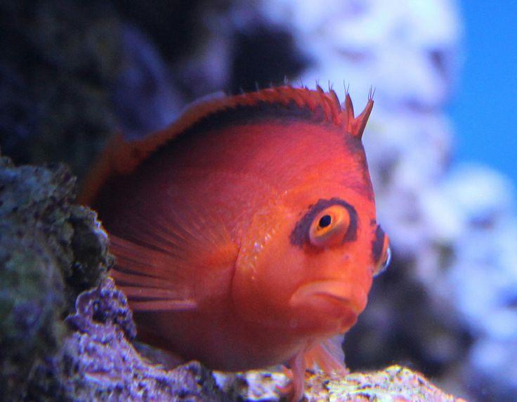 Särkänniemen Akvaario on täynnä vedenalaisia ihmeitä. Beautiful and delightfully dreadful things swim in the Särkänniemi Aquarium