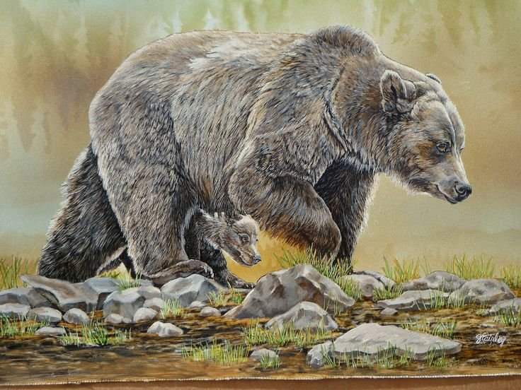 Grizzly bear cubs drawing - photo#16