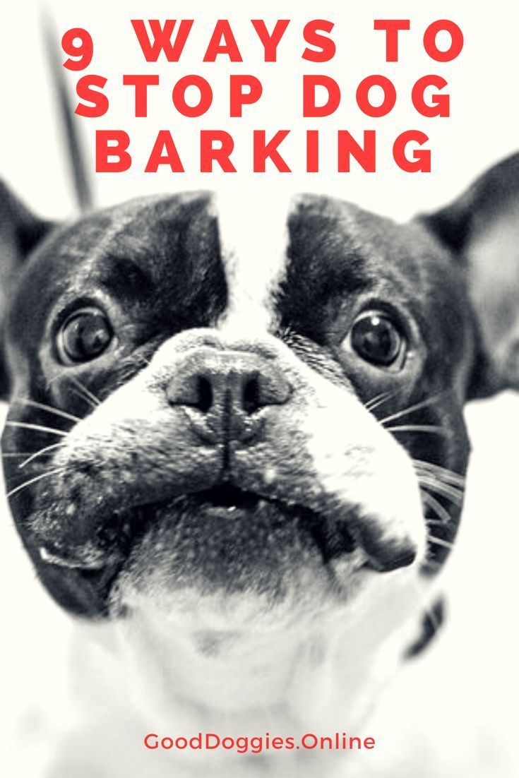 how to get a dog to stop barking at night