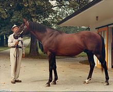 Damascus Sword Dancer-Kerala By My Babu 32 Starts 21 Wins 7 Seconds 3 Thirds, 3rd In Ky. Derby Then Won Preakness And Belmont In 1967. Champion 3 YO And Horse Of The Year In 1967. He Retired In 1968 After Bowing A Tendon And Finishing Last In The Jockey Club Gold Cup, The Only Time He Did Not Placed In Top Three.