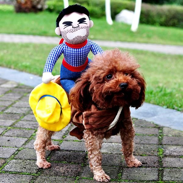 We're getting ready for Halloween early this year! Get a great costume for your dog either for Halloween or just for fun!