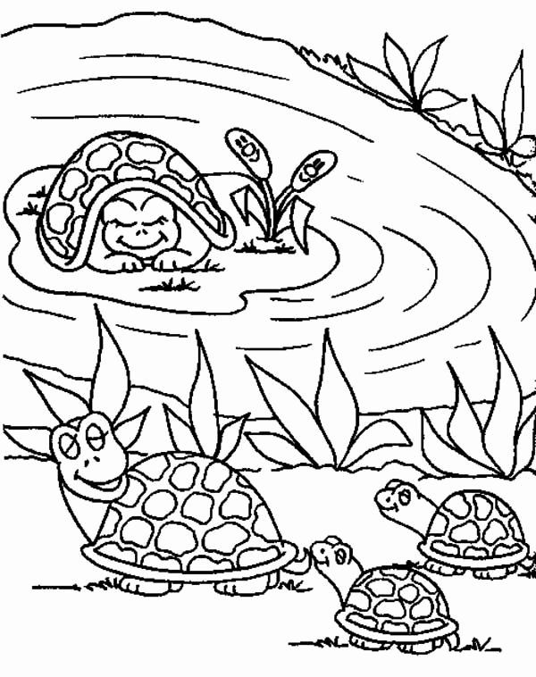 Pond Animals Coloring Pages Beautiful Frog Pond Coloring Pages Animal Coloring Pages Turtle Coloring Pages Farm Animal Coloring Pages