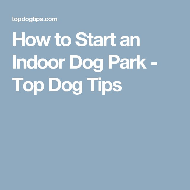 How to Start an Indoor Dog Park - Top Dog Tips - Tap the pin for the most adorable pawtastic fur baby apparel! You'll love the dog clothes and cat clothes! <3