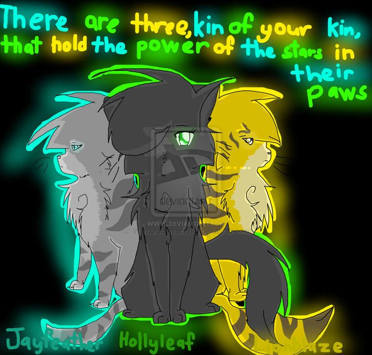Warriors The Prophecies Begin Book 3: 20 Best Images About Hollyleaf On Pinterest