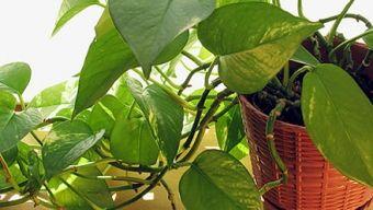 Φυτά εσωτερικού χώρου: πως τα φροντίζουμε