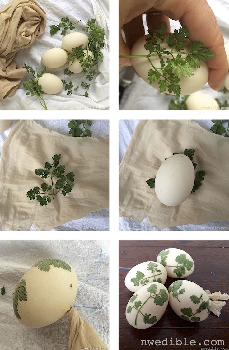 33 best chickens u0026 coops images on pinterest backyard chickens