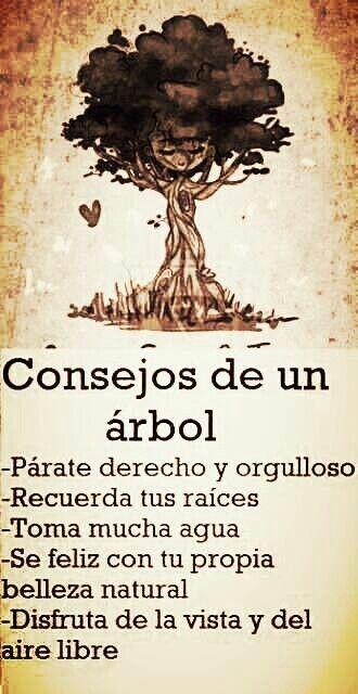 Consejos de un árbol #frases