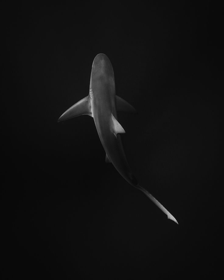 Sharks are definitely the most misunderstood anima ... - Sharks are definitely the most misunderstood animals. Don't fear them, fear for them. Say no to shark fin soup.