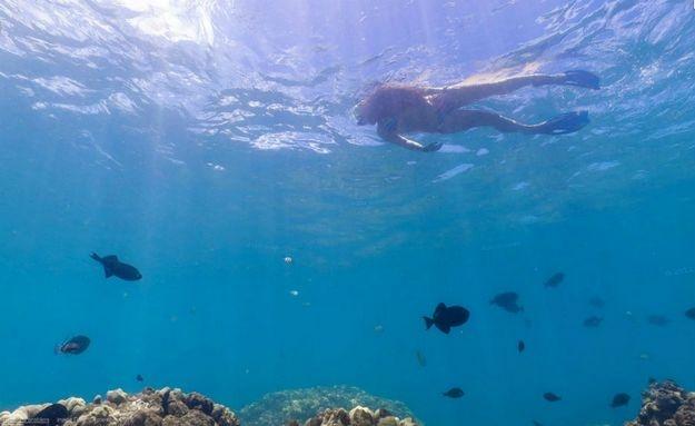 Mergulhadora no mar do #Havai foi fotografada pelo Google: http://abr.io/5CYC