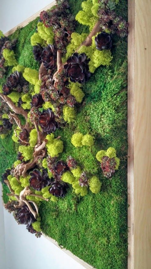 preserved plants sheet moss royal pool moss chartreuse colored reindeer moss driftwood. Black Bedroom Furniture Sets. Home Design Ideas