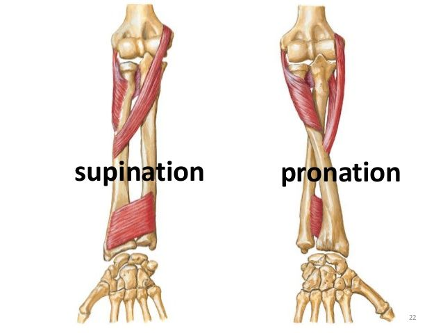 Image result for forearm pronated.
