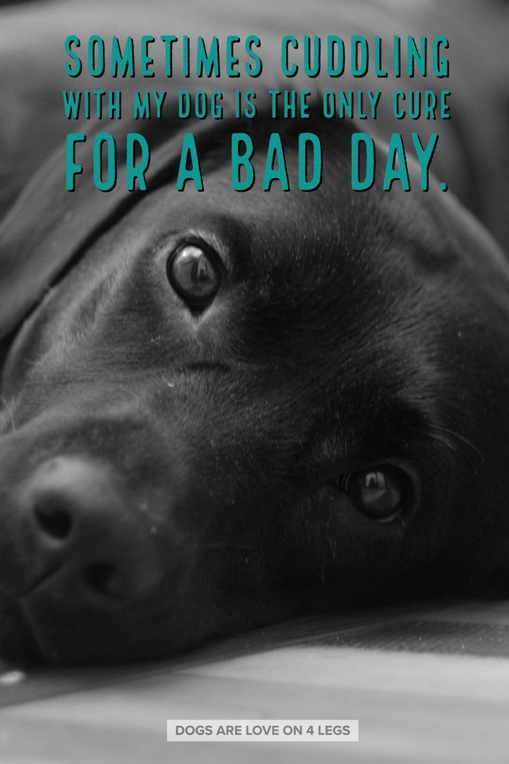 Dog Quote Sometimes Cuddling With My Dog Dog Dog Quotes Inspirational Quotes Funny Quotes Life Quo Dog Quotes Inspirational Dog Quotes Dog Quotes Funny