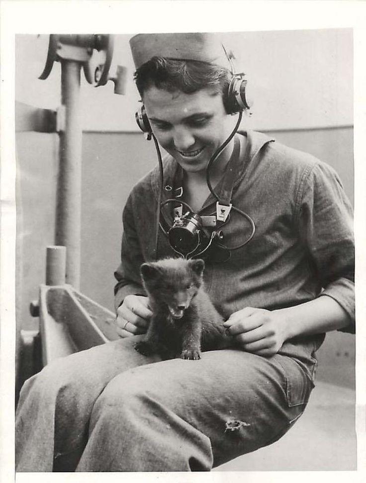 WWII U.S. Sailor Shares Bunk aboard Ship with Baby Fox Found on Attu Press Photo