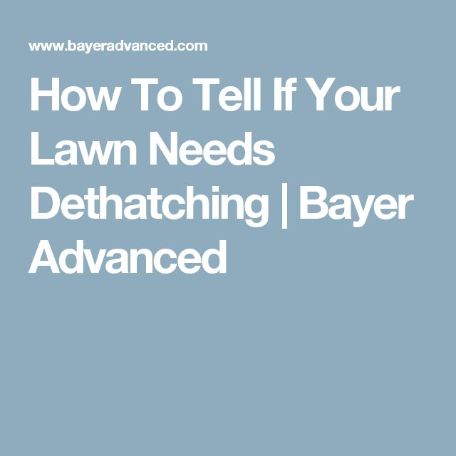 How To Tell If Your Lawn Needs Dethatching   Bayer Advanced
