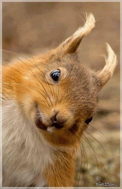 Guten Morgen,Eichhörnchen,hallo.