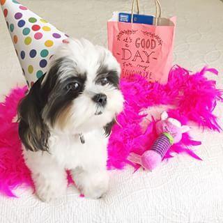 This is my dog Chloe Hi I'm Chloe follow me on Instagram my username is @itsmechloemae