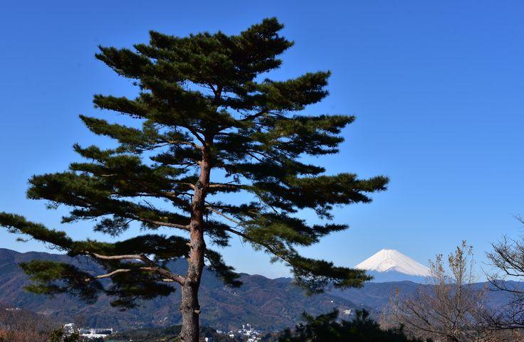 小室山公園からの富士山 2016.12