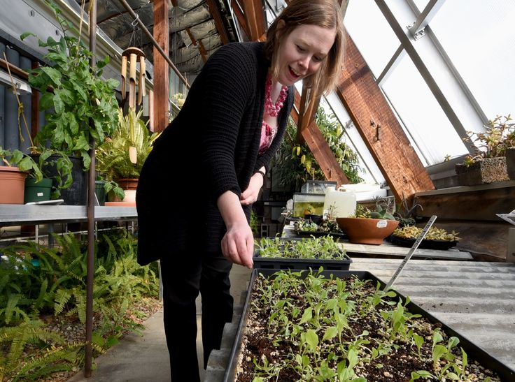 20160223radFoodBankLocal02-1 Kelli Maxwell, dean of student development at CCAC South, in the school's greenhouse, where lettuce for the student garden has sprouted. The produce from the garden will supplement the school's food bank for students.
