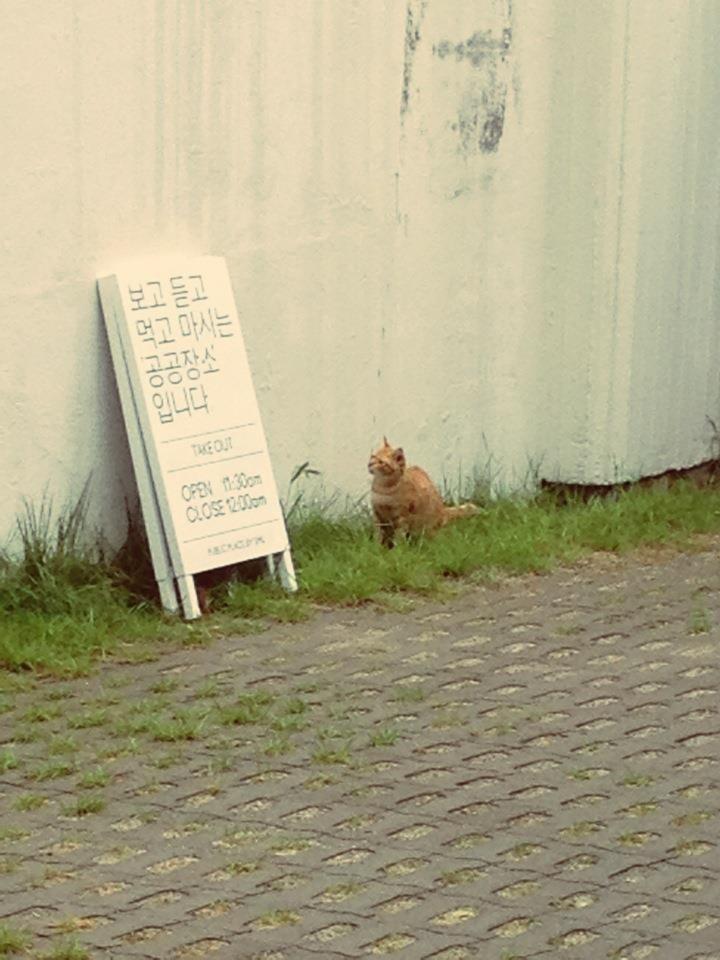 글 읽는 고양이*_*