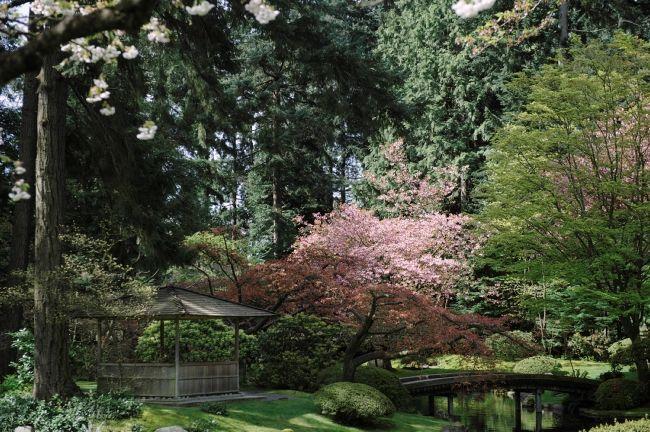 Cherry Blossoms at UBC Nitobe Memorial Garden. Photo: Destination Canada  #gardensbc #exploreBC #explorebcgardens #gardensbritishcolumbia #japanesegarden