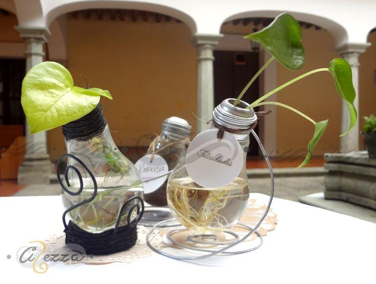 Variedad de Plantas para interiores: Musgo, pothos (teléfono colgante) y Anthurium.