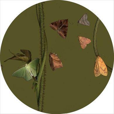 """Untitled (Moth 4)"" 2014 Sandra Kantanen (Helsinki, Finland 1974)"
