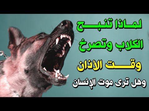 لماذا تنبح الكلاب وتصرخ عند سماع الاذان وهل يرى الكلب مـ ـوت الإنسان إجابة ستصدمك Youtube In 2020 Animals Dogs