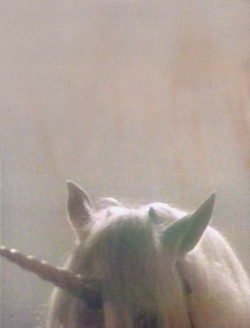 17 best images about unicorns on pinterest horns What do unicorns smell like