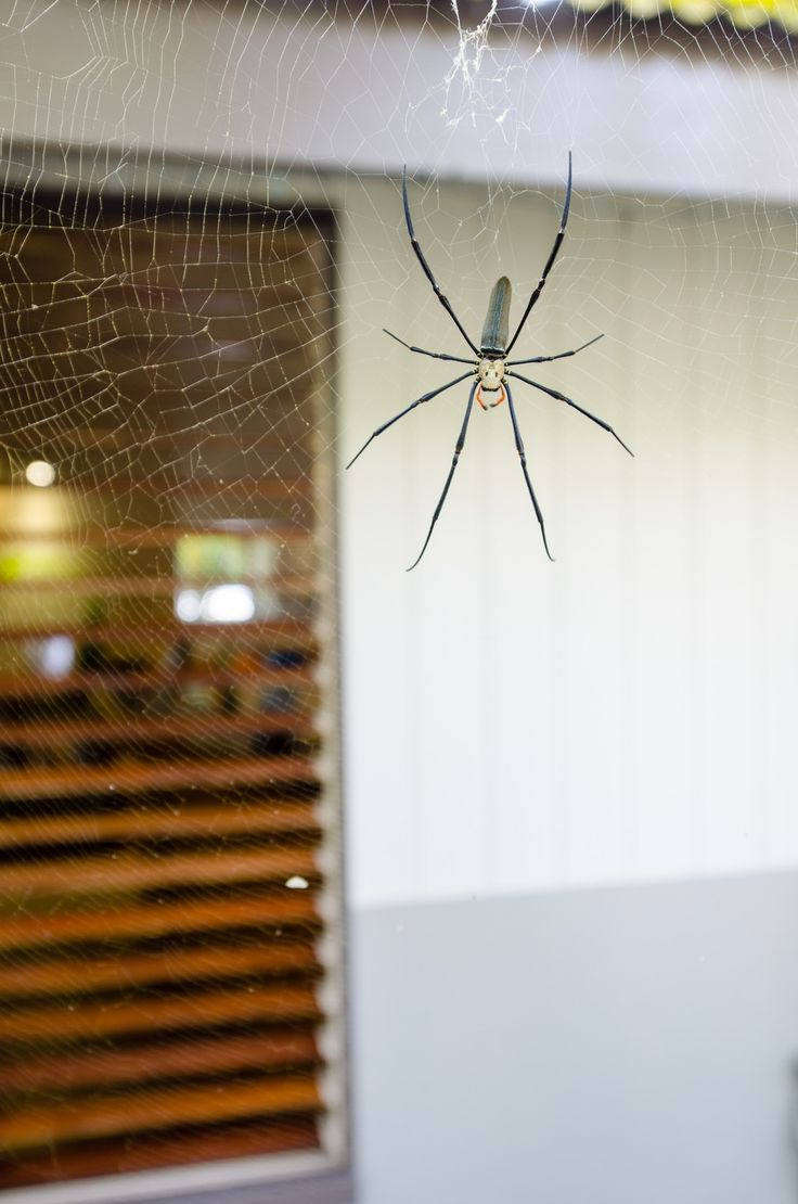 How to Prevent + Get Rid of Household Bugs - http://snip.ly/wckyj
