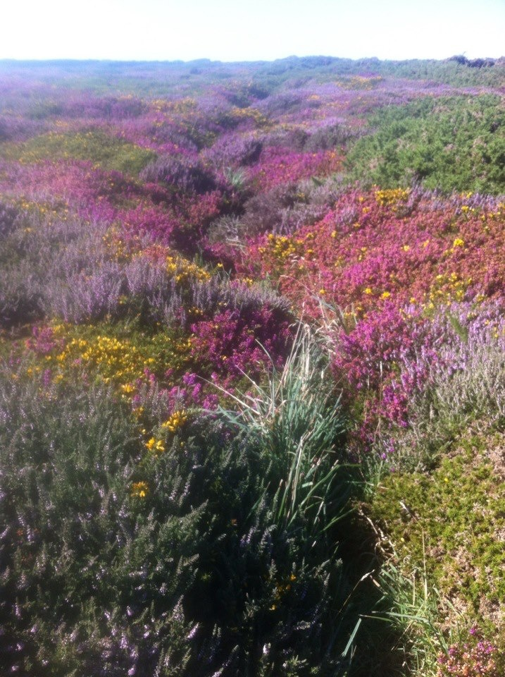 Old rifle range, Holyhead, Anglesey, WALES. Taken August 2012. The island is full of wild flowers and wild life