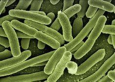 Comment bien choisir vos probiotiques et bien les utiliser ?