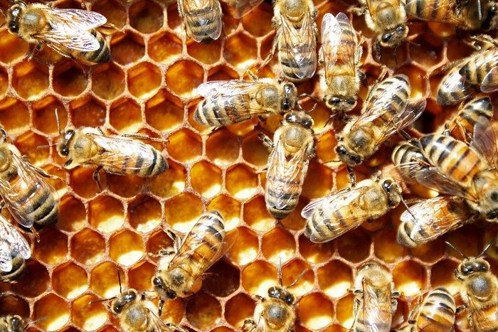 OXALIC ACID: Effective & Easy On Bees, But . . . | Bee Culture