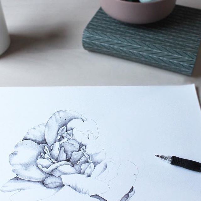 #illustration #floral #peony #ballpointpen #drawing