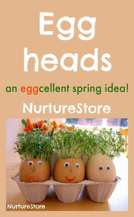 Put some cotton wool inside the shells and dampen them with some water. Sprinkle cress seeds all over the cotton wool – good coverage will give you a full head of hair