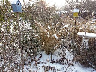 Aranyalma: Madaras, kertes az elmúlt napokból