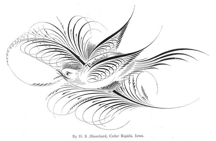 Bird Flourish, H.S. Blanchard