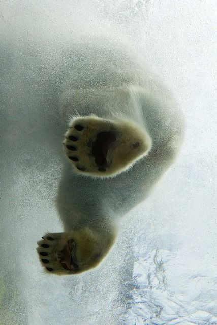 polar bear paws! What a gorgeous picture!
