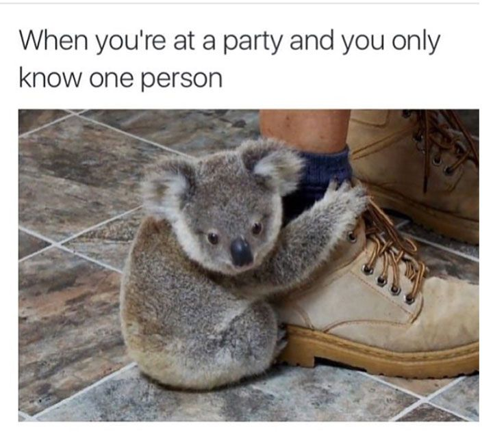 Animal Memes That Will Make Cry Because Of Laugh - 15