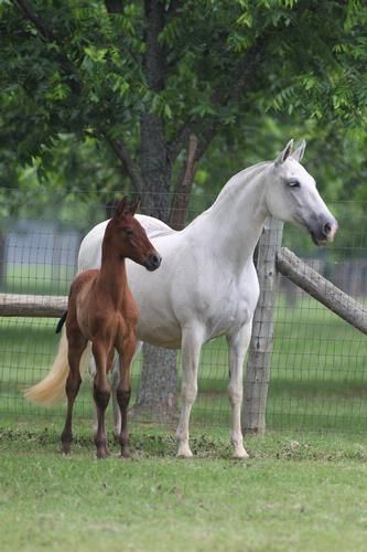 Two free horses for @thesmallequ